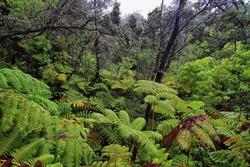 Rain forest in thurston lava tube surroundings