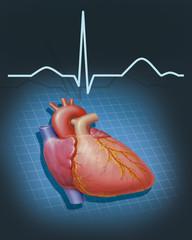 Herz mit EKG-Kurve