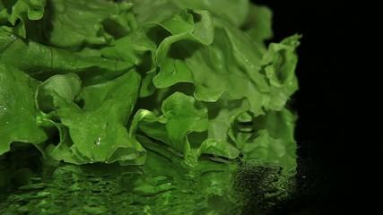 Green lettuce on black background close-up dolly shot