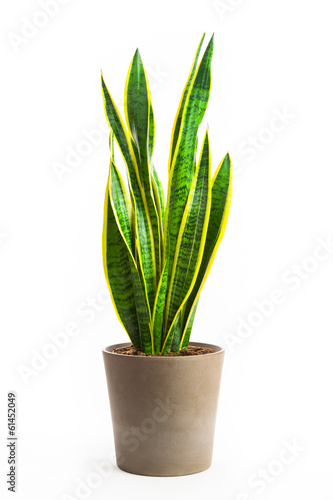 Fotobehang Cactus Planta de interior