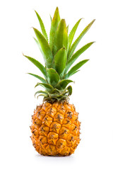 Ananas Baby