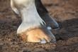 Close up of black horse hoofs