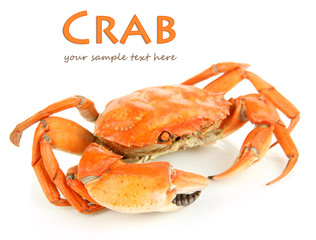 Boiled crab isolated on white