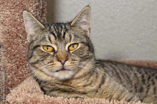 Tuinposter Eekhoorn Gray tabby cat laying on soft brown bed