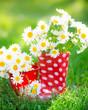 Obrazy na płótnie, fototapety, zdjęcia, fotoobrazy drukowane : Spring flowers
