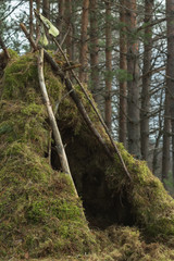 Forest wigwam with animal skull