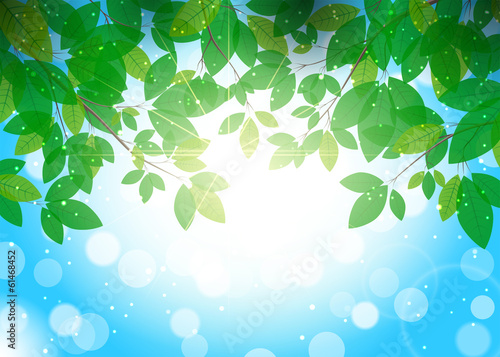 Beautiful summer background with leaves on branches