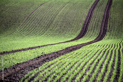 canvas print picture Frische Saatreihen auf einem Acker