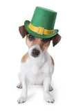 st patrick's day party dog