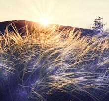 Sunny łąki