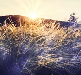 Sunny meadow © Galyna Andrushko