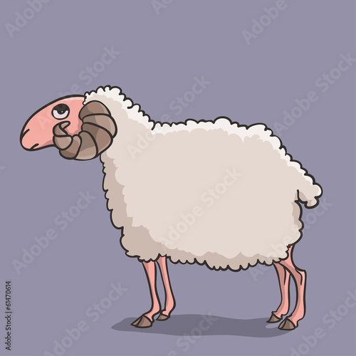 Sheep white
