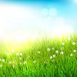 Obrazy na płótnie, fototapety, zdjęcia, fotoobrazy drukowane : Spring meadow