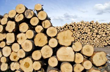fresh cut tree logs on field