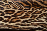 closeup of amur leopard fur background