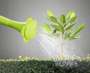 watering young tree
