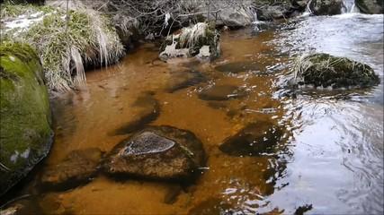 Die Kalte Bode im Harz