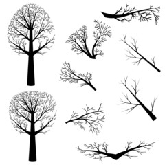 Bare trees silhouette
