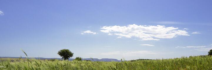 Paesaggio con albero e campo di grano