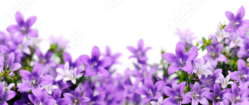 frame of bluebells - 61481460
