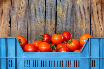 Blue crate with fresh tomatoes