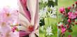 Collage - zarte Blüten