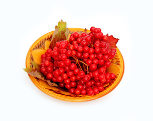 Bright red berries of viburnum on a plate isolated