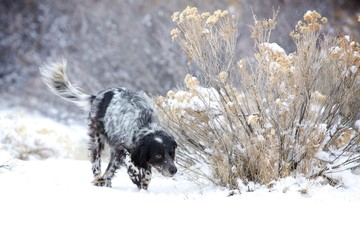Hunting in the Snow