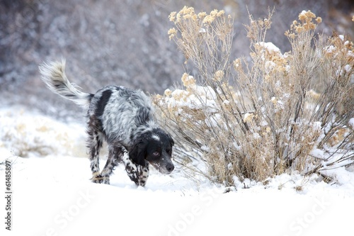 Hunting in the Snow - 61485897