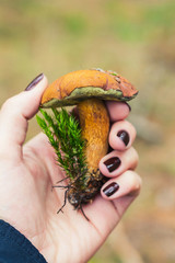 Edible boletus mushroom in female hand