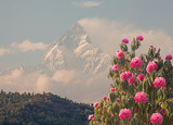 Spring rhododendrons and Machapuchare peak (6993 m).