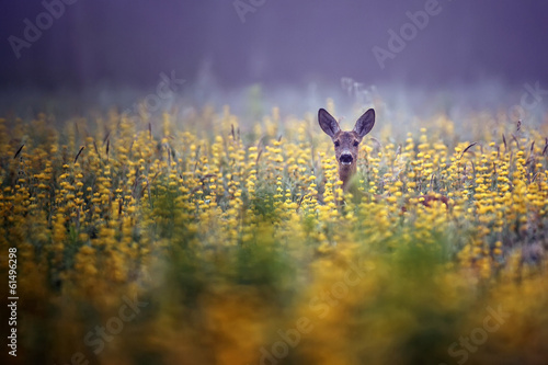 Deurstickers Hert Roe-deer in the morning mist