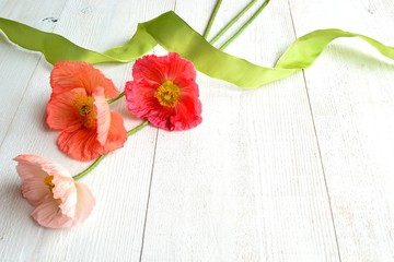 Pastel colors poppies with ribbon