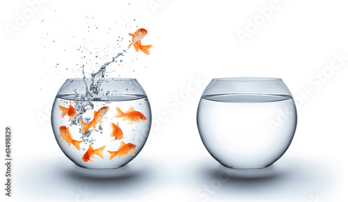 canvas print picture goldfish jumping out of the water - improvement concept - white