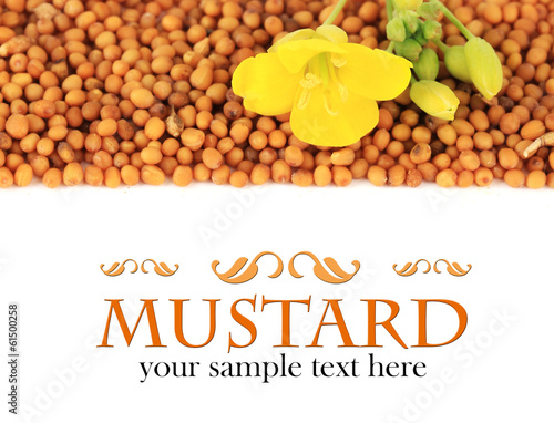 Mustard seeds with mustard flower isolated on white