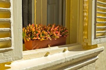 Window with yellow window shutters.