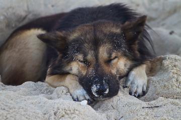 Dog sleeping at the beach of the Koh Ngai island Thailand