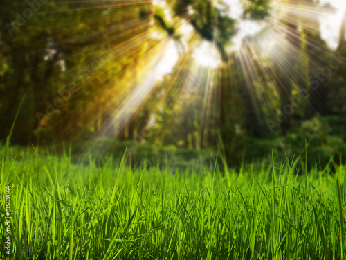 Grass field in forest