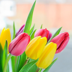 Multi coloured tulips