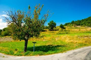 Magnifique paysage de Provence en France