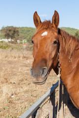 Horse on the farm, Turkey