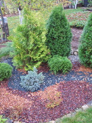 Autumn garden composition