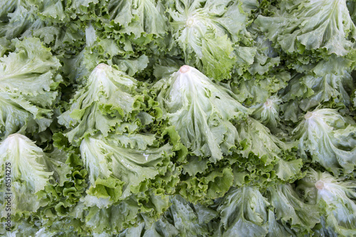 Macro view of fresh lettuces with crinkly leaves