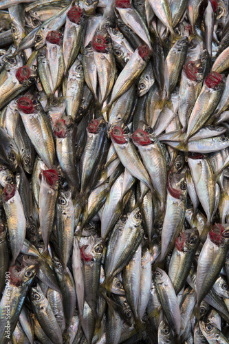Horse mackerels on a street fish bazaar stand in Istanbul, Turke