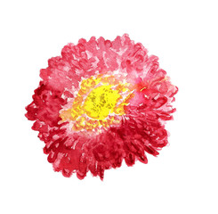 Flower of red aster