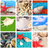 Collage of seashells close-up