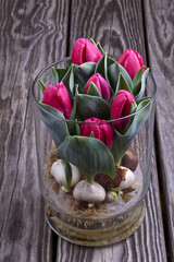 Blooming tulips in a glass vase