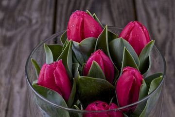 Tulips with dew drops in a glass vase