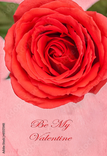 Valentine's Day Rose