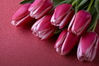 Tulips on a pink background